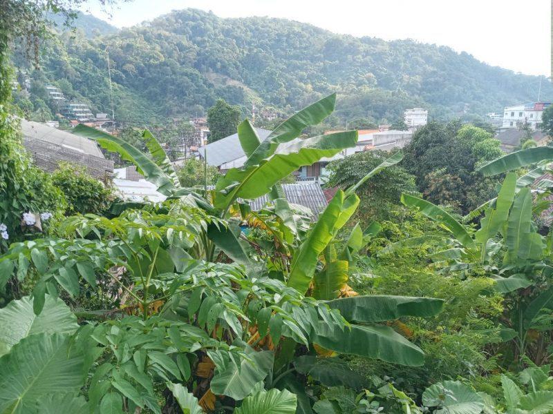 Продается земельный участок в двух километрах от пляжа Ката на острове Пхукет.