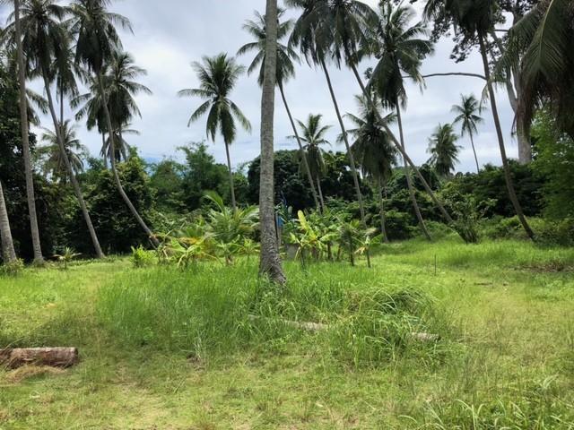 Земля Панган