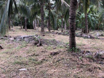 Земельный участок на продажу в Rawai. 5 Rai 3 ngan 20.5 sq.w.