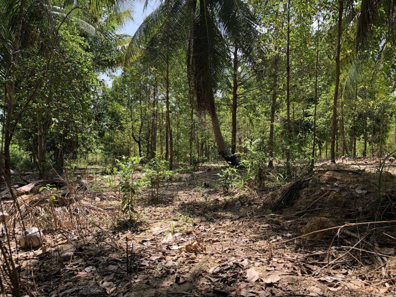 Земля Панган Около дороги, около гос.учреждения