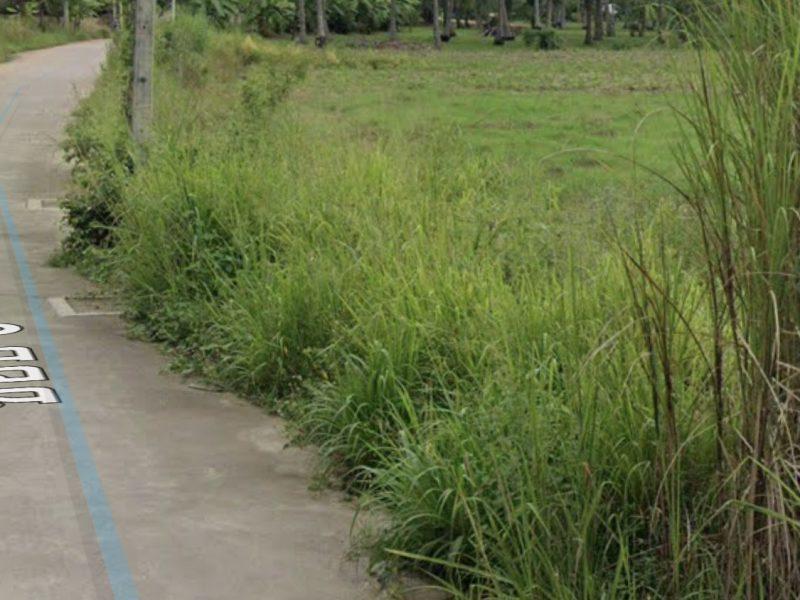 Земля в кокосовой роще